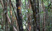 slide – trees